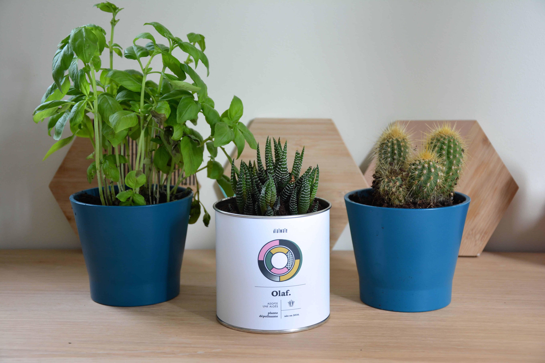 décoration intérieure plante verte
